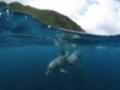 ちょこっとシアター「Dolphin × Planetarium~いるかの世界あれこれ~」