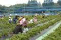 赤崎いちご園