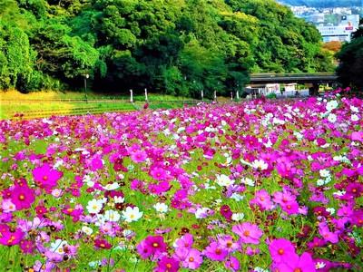 花 の は 国 くり ま